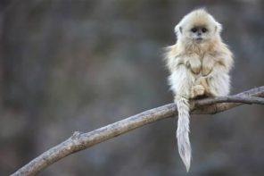 Viata = o maimuta la circ?